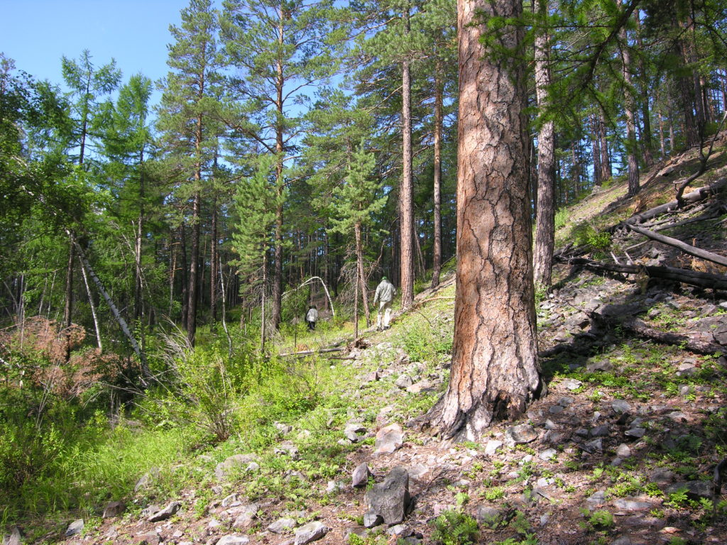 certification-of-forestry-operations-is-simplified-with-otmetkaid