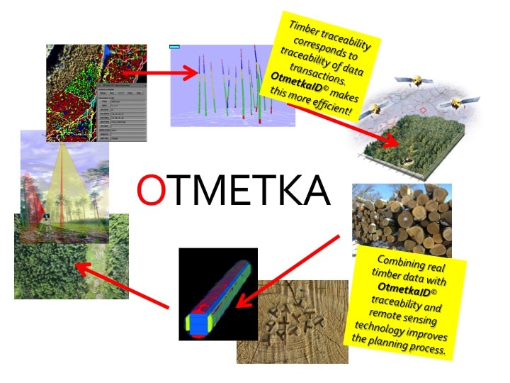 When coordinates are set within OtmetkaID marking system, data from each tree can be used as a key for forecasts made with remote sensing data.