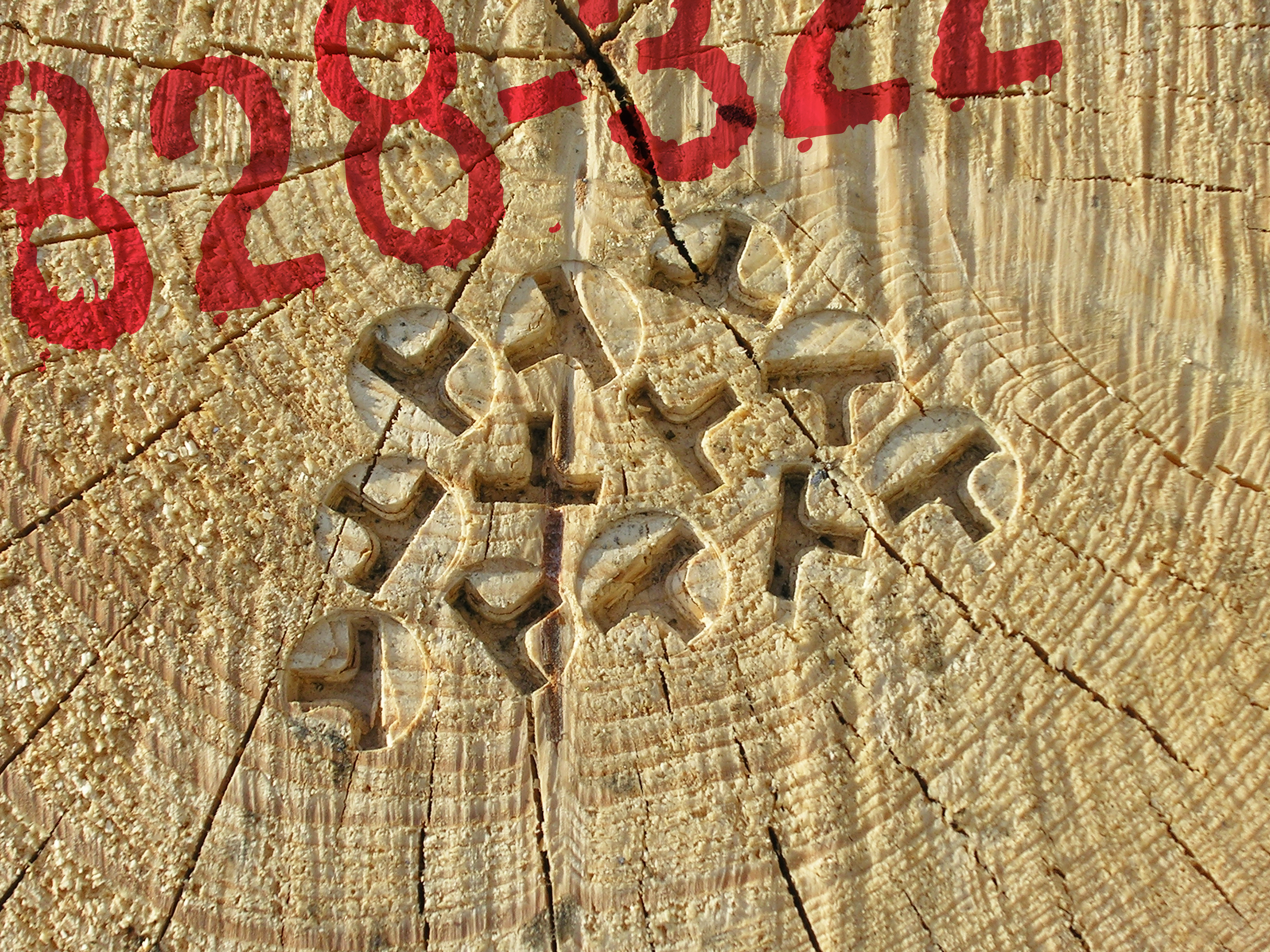 When OtmetkaID is stamped into the log, customizations can be made as markings with numbers or text, labels with a QR code, numbers and RFID or color codes.