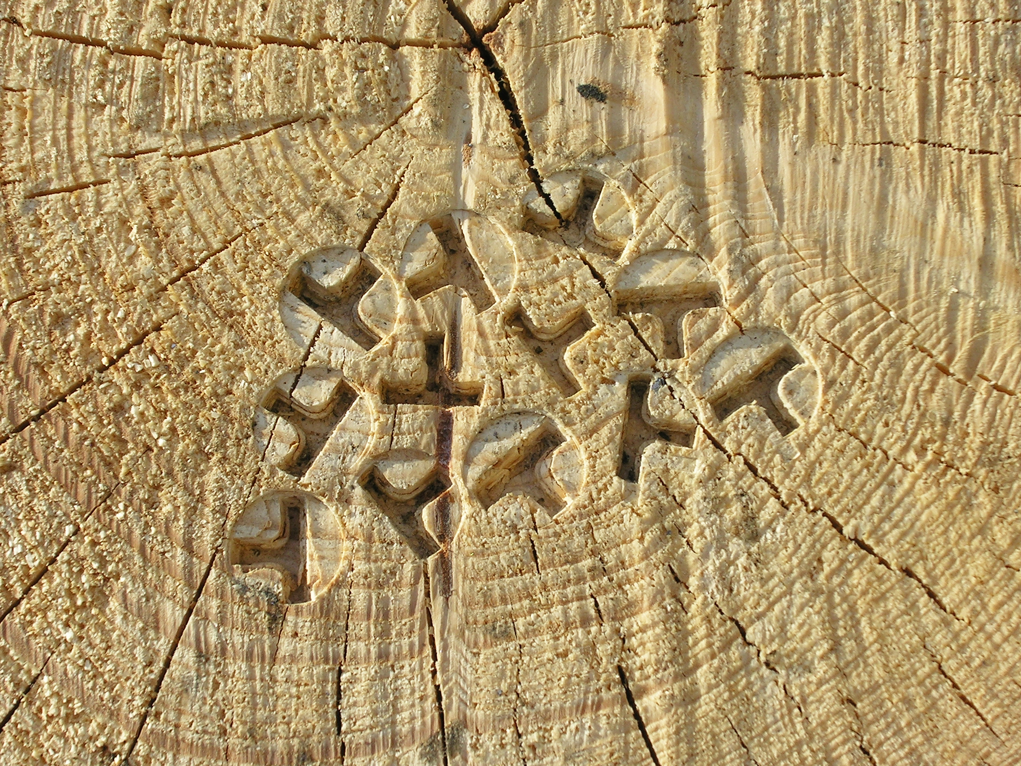 Timber is stamped with OtmetkaID, a marking system that provides guaranteed timber traceability.