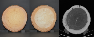 Cameras that record different spectral wavelength bands reveal different wood properties. With fixed reference markings, a log stamped with OtmetkaID, geometric calculations are easily guaranteed from the image such as the percentage of core wood.