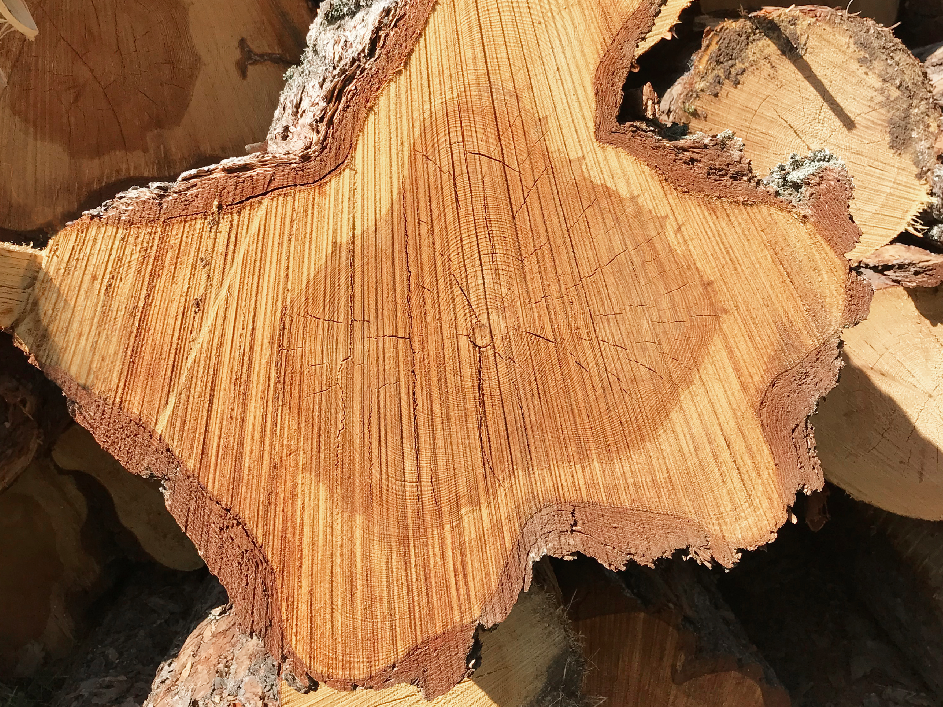Wood is a living material with individual shapes, colors and other wood characteristics. During timber handling and storage, repeated readability with camera deteriorates due to color changes, fungal attacks, cracks, clay, snow, and more.