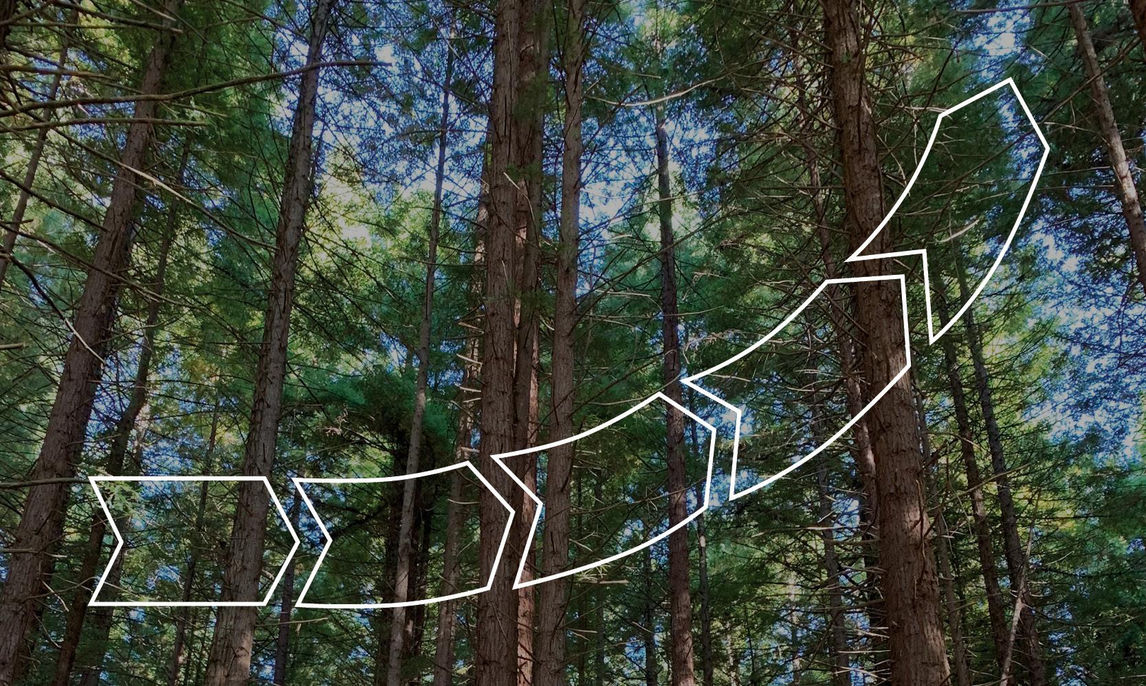 otmetka-partner-forest-growers-research-fgr-new-zealand-illustration-2020